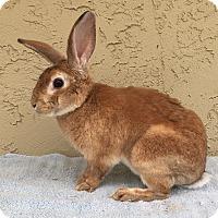 Adopt A Pet :: Jason - Bonita, CA
