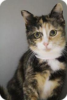 Calico Cat for adoption in Lincolnton, North Carolina - Sherry $20