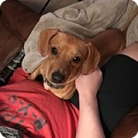 Adopt A Pet :: Milo Maxilla - Houston, TX