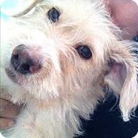 Adopt A Pet :: Frisbee - Encino, CA