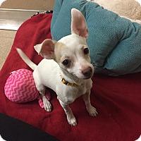 Adopt A Pet :: Juliet - Naperville, IL