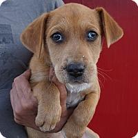 Adopt A Pet :: Tater - Oviedo, FL