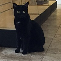 Adopt A Pet :: Sheba - West Palm Beach, FL