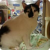 Adopt A Pet :: Krista - Burlington, NC