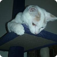 Adopt A Pet :: Vanilla - Lorain, OH