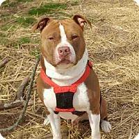 Adopt A Pet :: Finn - Chestertown, MD