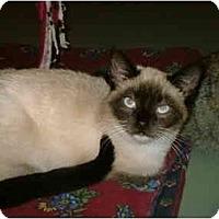Adopt A Pet :: Karlie - Warren, OH