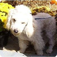Adopt A Pet :: Chuck - Plainfield, CT
