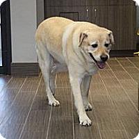 Adopt A Pet :: Sasha - Cumming, GA