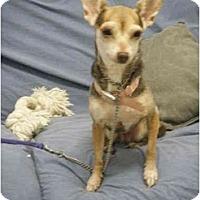 Adopt A Pet :: Cheena - Milwaukee, WI