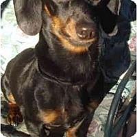 Adopt A Pet :: Buddy #2206 - San Jose, CA