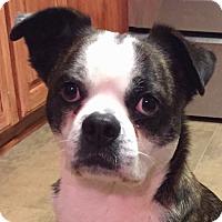 Adopt A Pet :: SCOTTY - North Augusta, SC