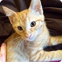 Adopt A Pet :: Apricat - Chattanooga, TN