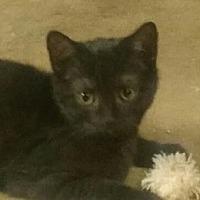 Adopt A Pet :: Malcom - Yorba Linda, CA