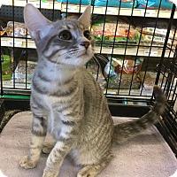 Adopt A Pet :: Raina - Gilbert, AZ