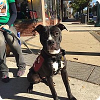 Adopt A Pet :: Billy - Cleveland, OH