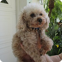 Adopt A Pet :: WIKEY - Melbourne, FL