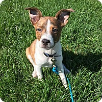 Adopt A Pet :: Charli - New Oxford, PA