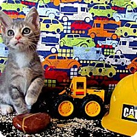 Adopt A Pet :: Aidan - Orlando, FL