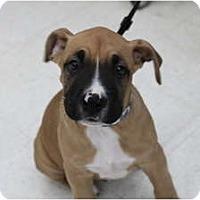 Adopt A Pet :: Riley - ARDEN, NC