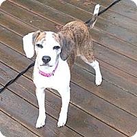 Adopt A Pet :: Bay Bay - Hamilton, ON