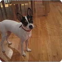 Adopt A Pet :: Rocky in Houston - Houston, TX