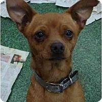Adopt A Pet :: Sherman - Fowler, CA