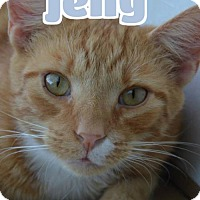 Adopt A Pet :: #93-3778D Jelly - foster GB - Lawrenceburg, KY