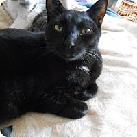 Adopt A Pet :: Eddie Fisher - Abrams, WI