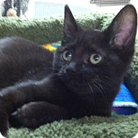 Adopt A Pet :: Irish - Trevose, PA