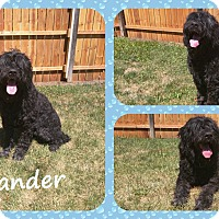 Adopt A Pet :: Alexander - DOVER, OH