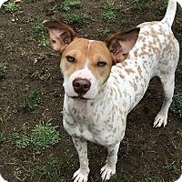 Adopt A Pet :: Linda - Tumwater, WA