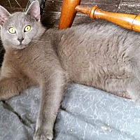 Adopt A Pet :: Grayson - Montgomery, IL