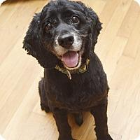 Adopt A Pet :: Cooper - Marietta, GA