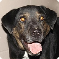 Adopt A Pet :: Angus - Oxford, MS