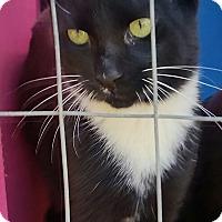 Adopt A Pet :: SAM - Ocala, FL