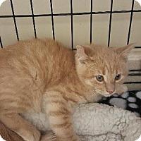 Adopt A Pet :: COTY - Houston, TX