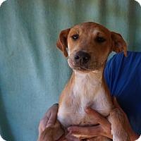 Adopt A Pet :: Pluto - Oviedo, FL