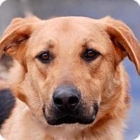 Adopt A Pet :: Rocky - Portola, CA