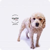 Adopt A Pet :: Fonse - Castaic, CA