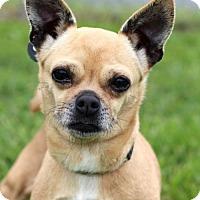 Adopt A Pet :: Fajita - Bedford, VA
