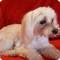 Adopt A Pet :: Sam - Vancouver, WA