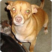 Adopt A Pet :: PAL - Leesport, PA