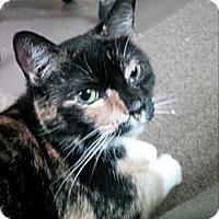 Adopt A Pet :: Dennis 2