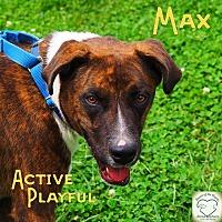 Shepherd (Unknown Type) Mix Dog for adoption in Washburn, Missouri - Max