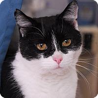 Adopt A Pet :: Catalina - Winchendon, MA