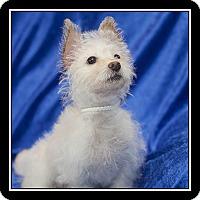Adopt A Pet :: Prancer - San Diego, CA