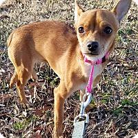 Adopt A Pet :: Dime - Cincinnati, OH