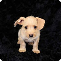 Adopt A Pet :: Enzo - Long Beach, CA