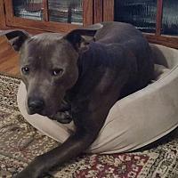 Adopt A Pet :: Kaine - Radford, VA